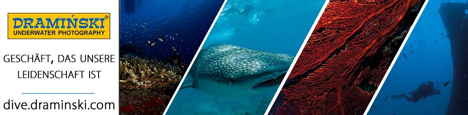Bezaubernde Unterwasserlandschaften fotografiert von dem Besitzer der Firma DRAMINSKI. Prüfen Sie es!