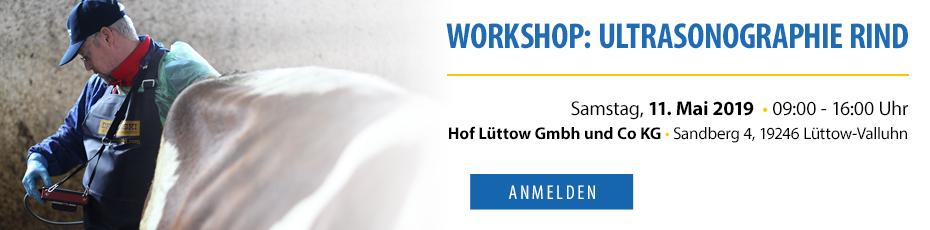 Workshop Ultrasonographie Rind