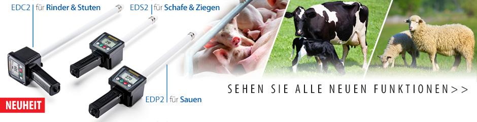 Moderne Brunstdetektoren in der Tierzucht. Effektive Besamung.